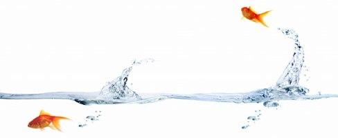 fish-water